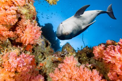 Fototapet delfin under vattnet på blå havet bakgrund