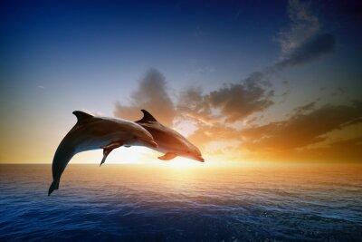 Fototapet delfiner hoppa