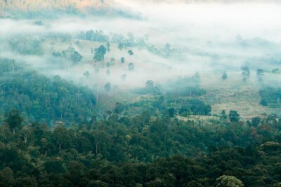 Fototapet Dimma i dalen
