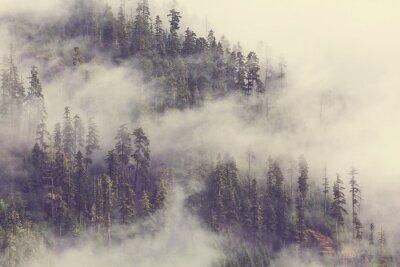 Fototapet Dimma i skogen