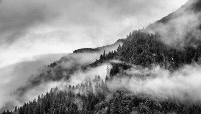 Fototapet dimma på bergstopp med tall