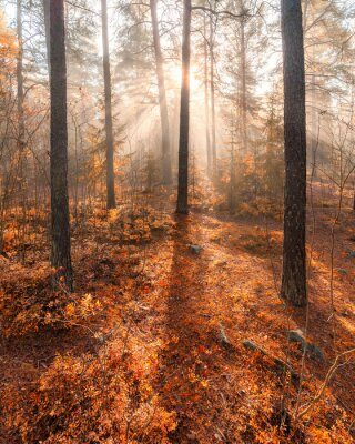 Fototapet Dimmig morgon solljus skog