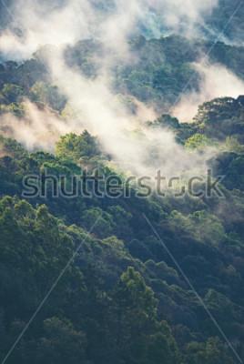Fototapet Dimmig skog i tropiska