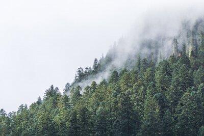 Fototapet dimmigt över forrest på kvällen.