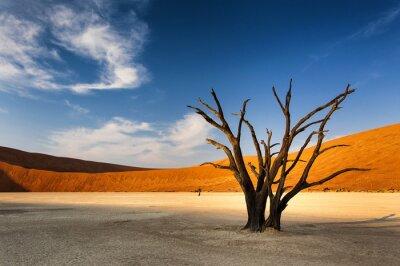 Fototapet Döda träd i Sossusvlei i Namiböknen, Namibia