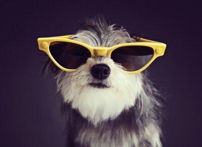 Fototapet Dog i glasögon 2
