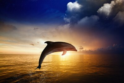 Fototapet Dolphin hoppning