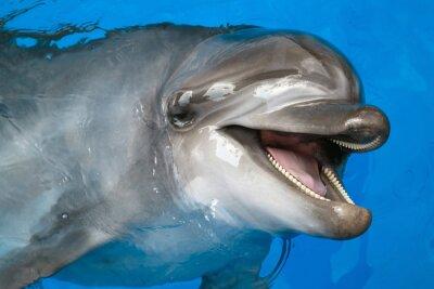 Fototapet Dolphin tittar upp
