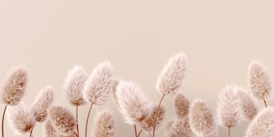 Fototapet Dry fluffy flowers beige pastel color boho background 3d rendering. Abstract Pampas grass isolated - calm floral wallpaper.