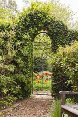Fototapet Eisernes Gartentor i Buchsbaumhecke