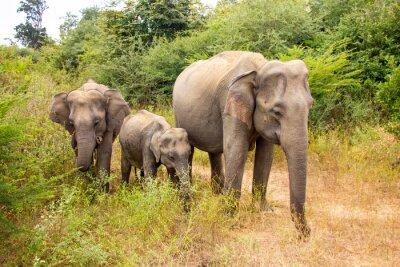Fototapet elefant