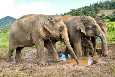 Fototapet elefant besättning med en baby elefant vid en billabong