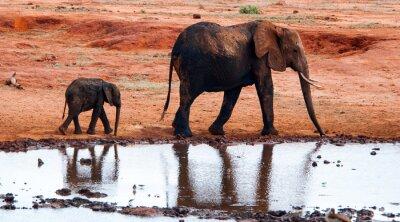Fototapet Elefant i Tsavo East National Park