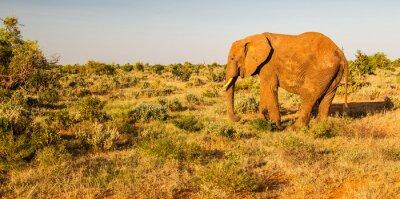 Fototapet Elefant i Tsavo East National Park, Kenya