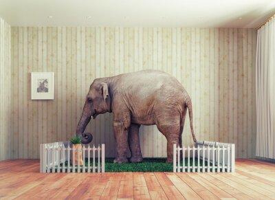 Fototapet Elefant kalv - husdjur