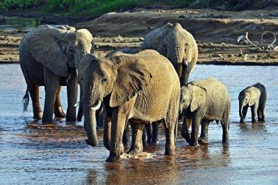 Fototapet Elefant på savannen