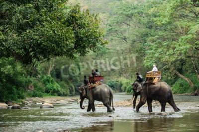 Fototapet Elefant vandring genom djungeln i norra Thailand
