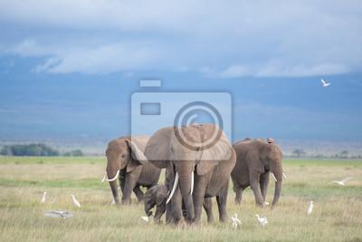 Fototapet elefanter i Amboseli / familj