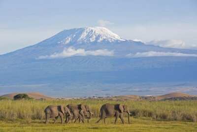 Fototapet Elefanter med Kilimanjaro
