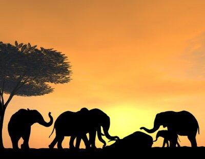 Fototapet Elefanter Morn sina döda vid solnedgången, en mycket öm scen.