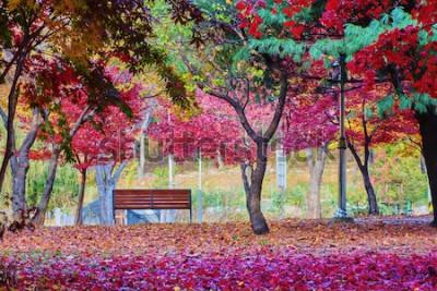 Fototapet En bänk i en park med många blad av det röda lönnträdet. Fredlig plats.