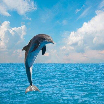 Fototapet en hoppande delfiner
