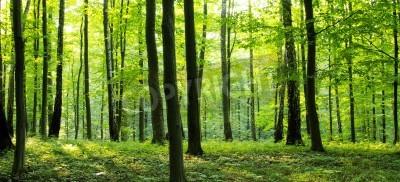 Fototapet En landsväg genom en skog full av träd.