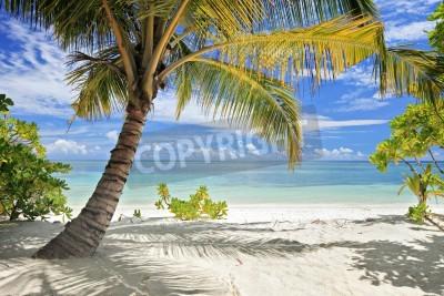 Fototapet En scen med palmer och sandstrand i Maldiverna ön