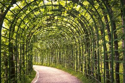 Fototapet En vacker grön arkad i parken med en väg.