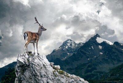 Fototapet ensam Deer