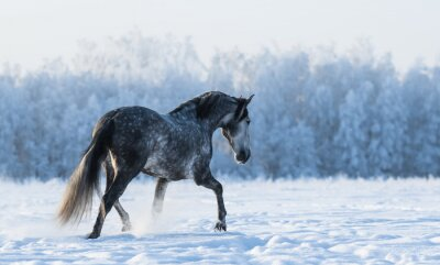 Fototapet Ensam häst går på fältet