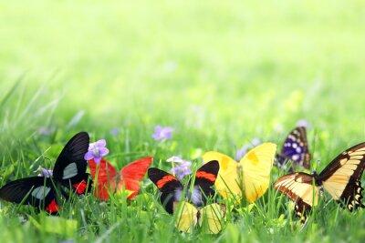 Fototapet Exotiska fjärilar Framing Green Grass Bakgrund