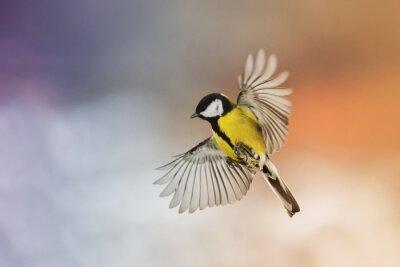 Fototapet fågel fågel flyga sträcka på vingarna i himlen vid solnedgången