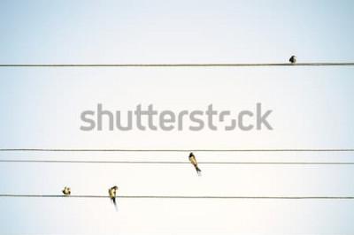 Fototapet Fåglarbröst som sitter på minimalistisk vårbakgrund för trådar