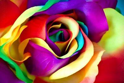 Fototapet falska ros blomma