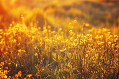 Fototapet fält av vårblommor