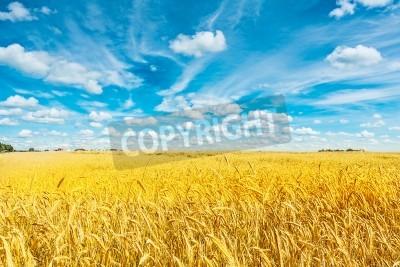 Fototapet fält gyllene vete och mulen himmel