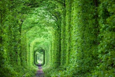 Fototapet Fantastiska Real Tunnel of Love, gröna träd och järnvägen