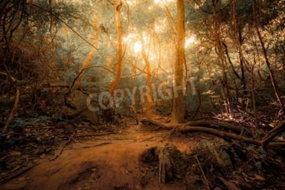 Fototapet Fantasy tropisk djungel skog i surrealistiska färger. Koncept landskap för mystisk bakgrund