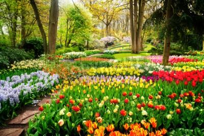 Fototapet Färgglada tulpaner Blomsterbäddar och bana i en vårformell trädgård, retrotonad