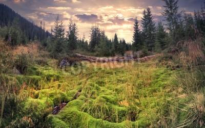 Fototapet Färgglatt sommar soluppgång i den magiska skogen med stor mattan av grönmos
