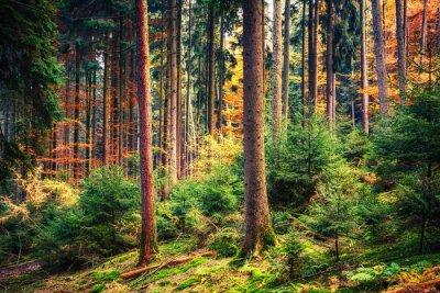 Fototapet Färgrik höst skog i Tyskland