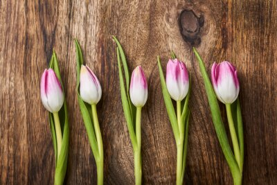 Fototapet fem rosa tulpaner på trä bakgrund