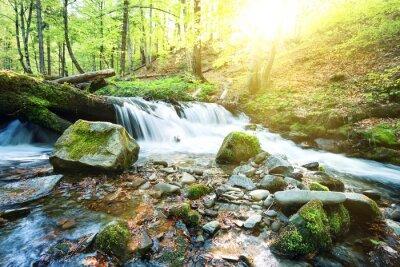 Fototapet Fjällbäck vattenfall i den gröna skogen