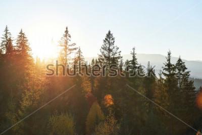 Fototapet Fjällhöstlandskapet med färgstark skog. Dramatisk morgonplats, röda och gula höstlöv. Plats plats Karpater, Ukraina, Europa.