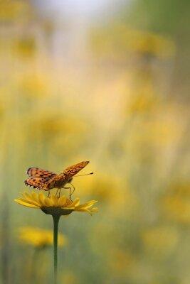 Fototapet Fjäril i trädgården