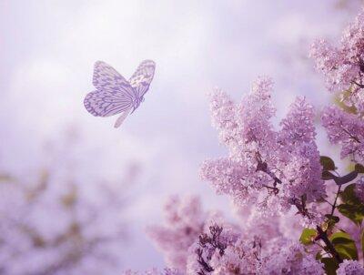 Fototapet Fjäril och blomma
