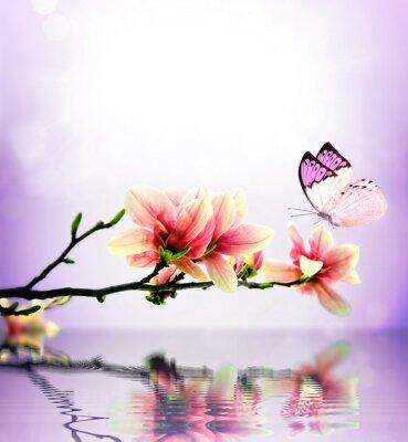 Fototapet Fjäril och blomma magnolia