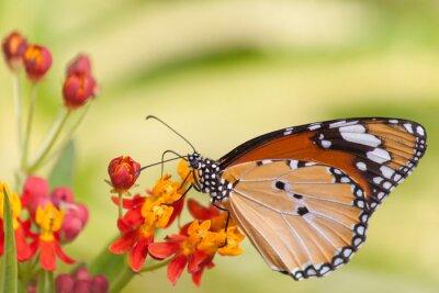 Fototapet Fjäril på blomma