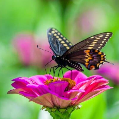 Fototapet Fjäril på en blomma